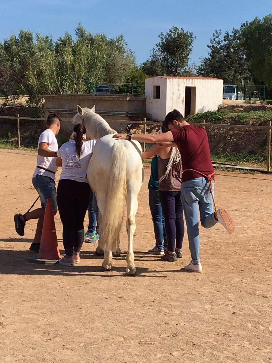 bullying terapia caballos